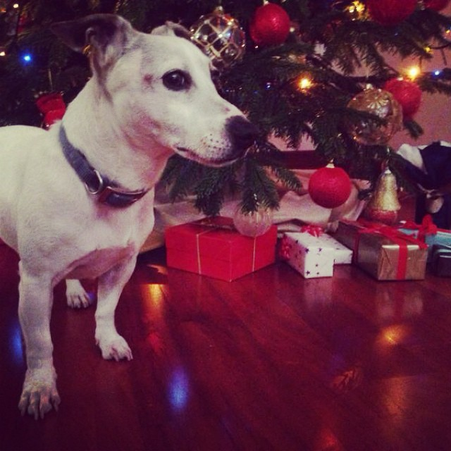 Merry Christmas! #christmastree#dylan#lovely#dog#waitingforsanta#happytime#