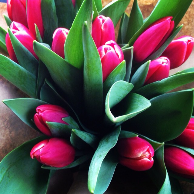 Happy Spring!! #today #tulips #love #spring #march