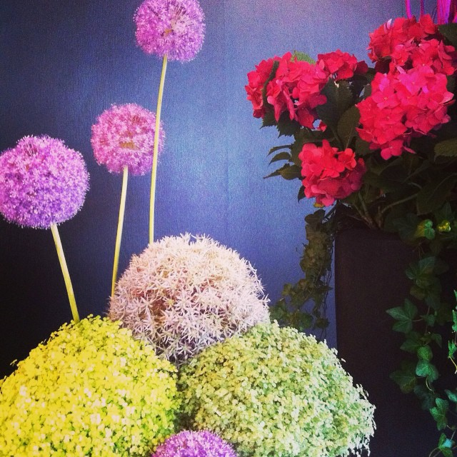 Have a beautiful week!! #flowers #hydrangea #agapanthus #colours
