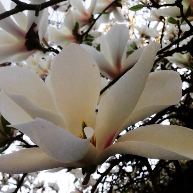 #spring #pure #delicate #elegant