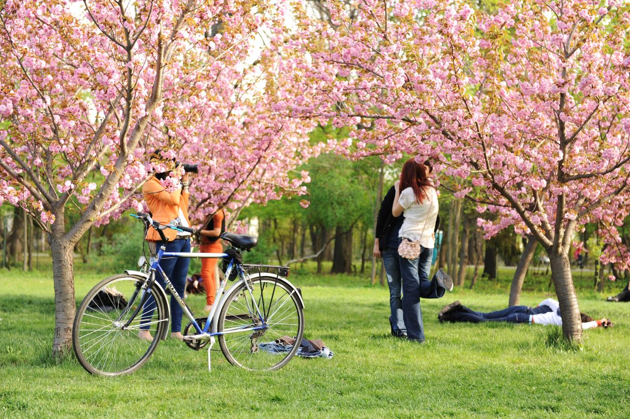 Gradina japoneza din parcul Herastrau, Bucuresti
